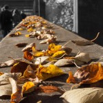 Herbstlaub und Menschen