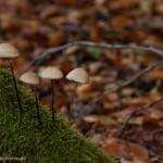 Nahaufnahme Pilze