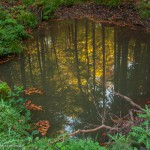 Spiegelung vom Herbstwald