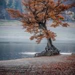 Baum in Herbstlandschaft