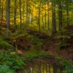 Spiegelung im Herbstwald